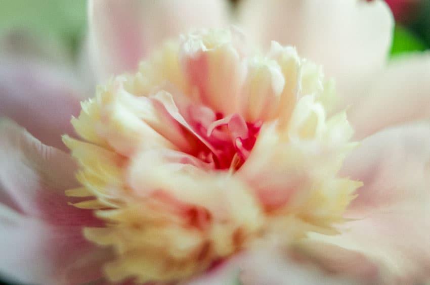 发现简单而清新的美 胶片味十足的清纯花朵