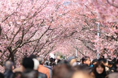 春天赏樱必败!日本限定资生堂人气美容食品