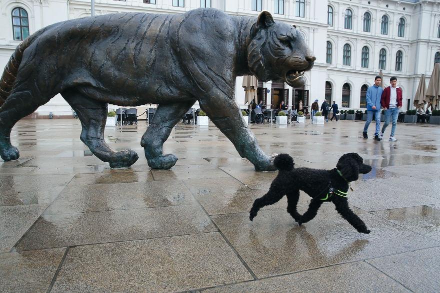 生動活潑的愛犬 俏皮狗子的街頭日常