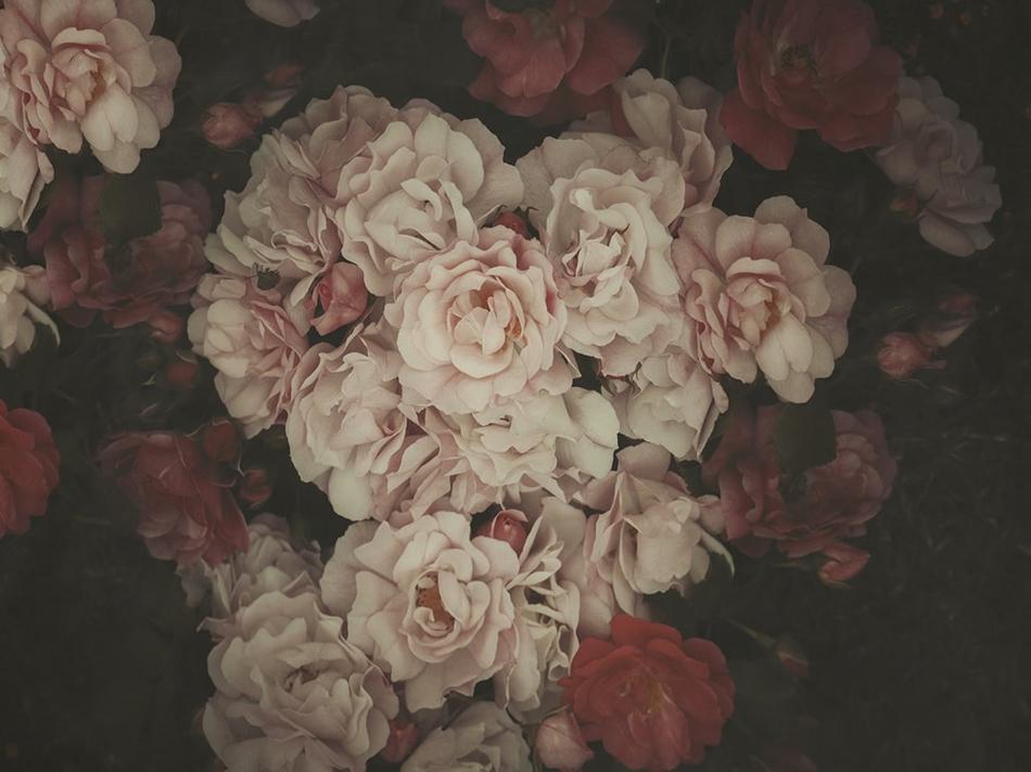 浓妆淡抹总相宜 唯美的玫瑰花视觉盛宴