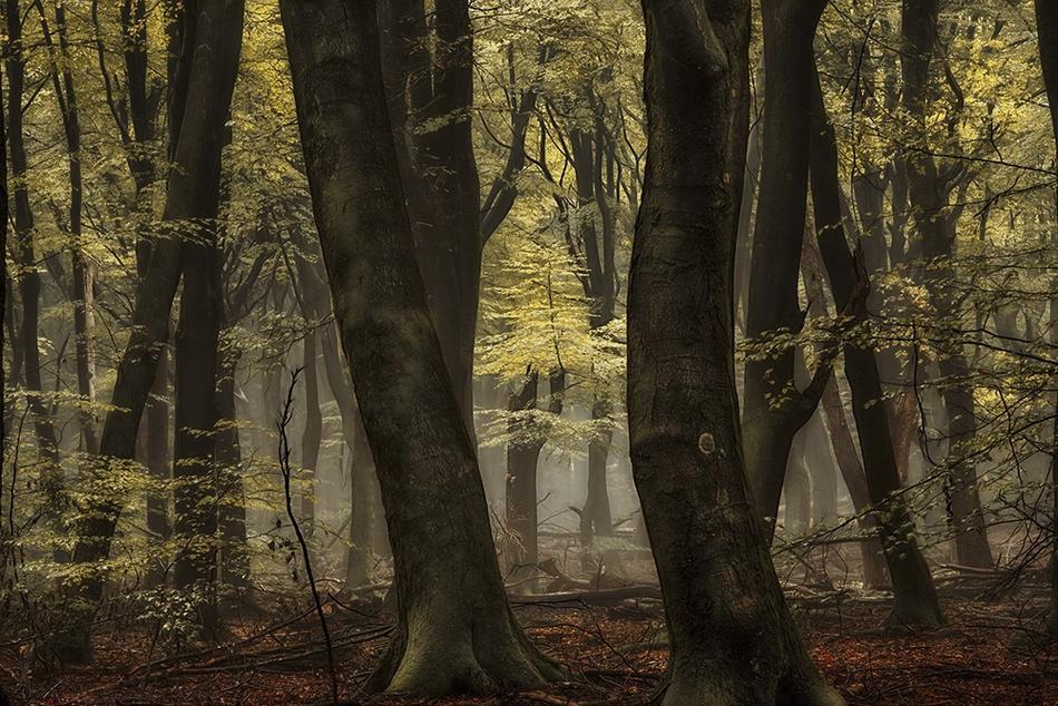 四季的色彩 幽靜森林中的童話般視覺