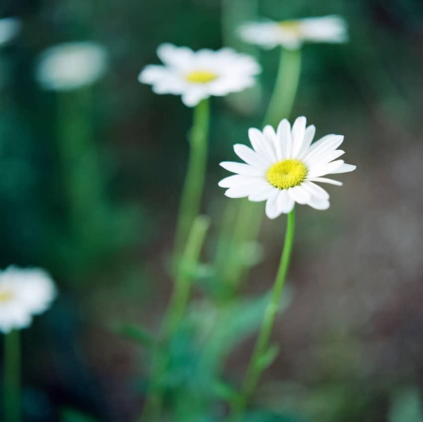 發現簡單而清新的美 膠片味十足的清純花朵