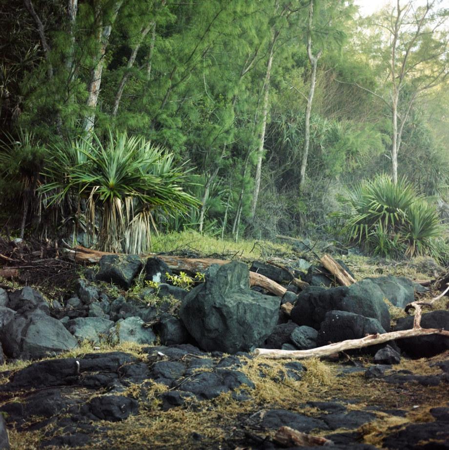 潮濕的密林 沉浸熱帶的綠色世界